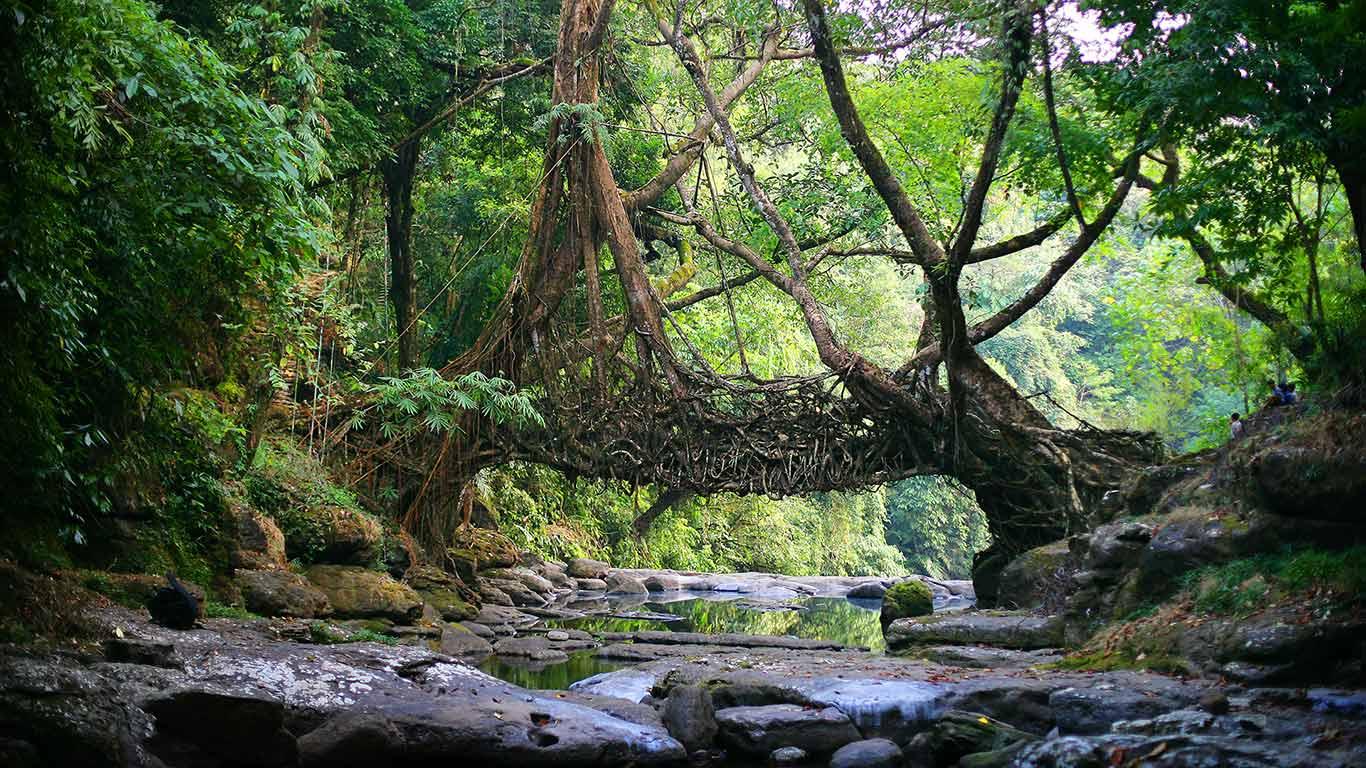 East-Khasi-Hills-licing-root-bridge