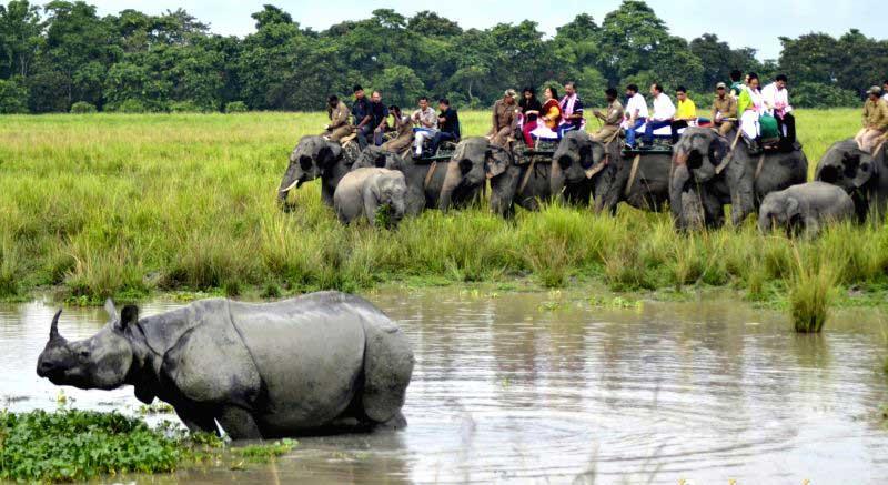 Assam Tourist Destinations - Kaziranaga National Park Wildlife Sanctuary 999