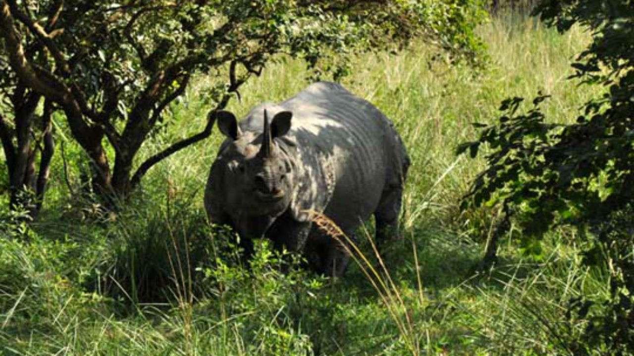 Pobitora Wildlife Sanctuary - Assam Tourist Destinations